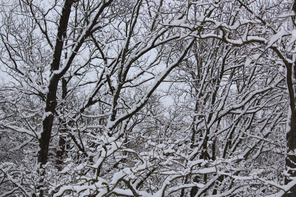 Arbres sous la neige aux Mureaux