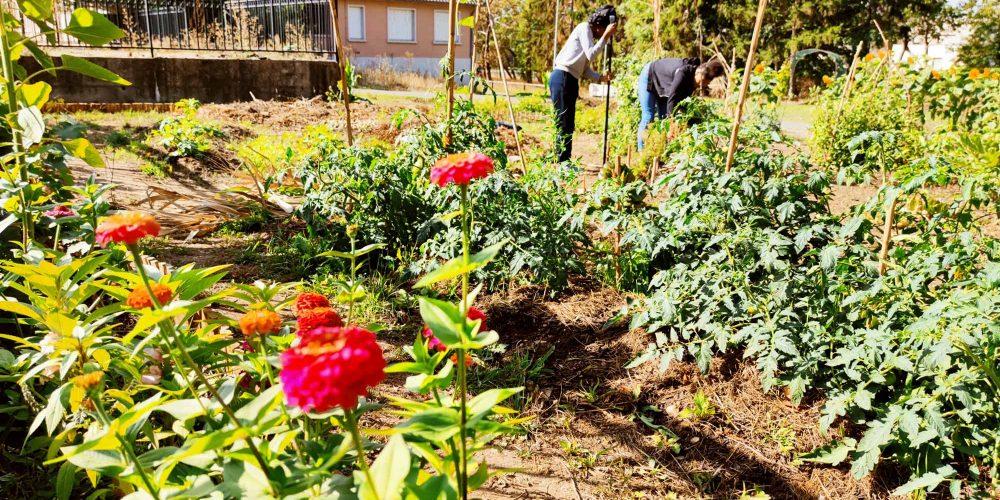 Des nouvelles des 'Jardins de la Rencontre' au parc du château de Bècheville