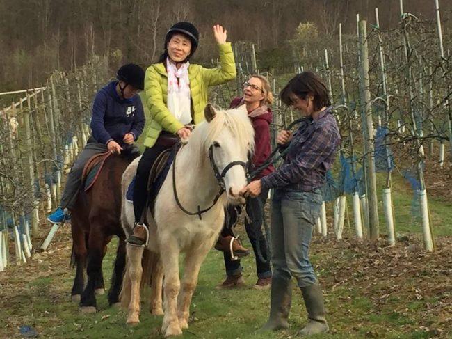 Les chevaux des Préaux – Ecquevilly