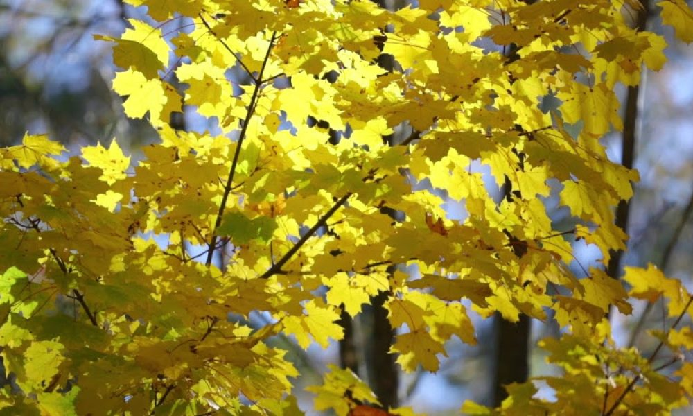 arbre feuillage