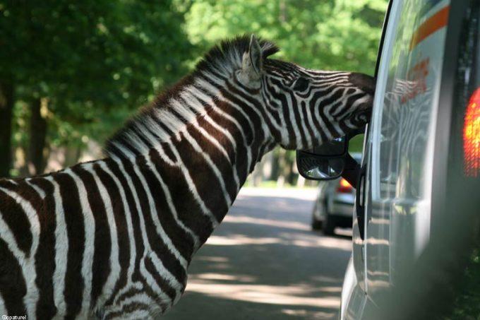 Parc Animalier de Thoiry