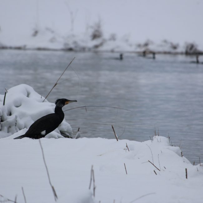 Ces jours de neige aux Mureaux
