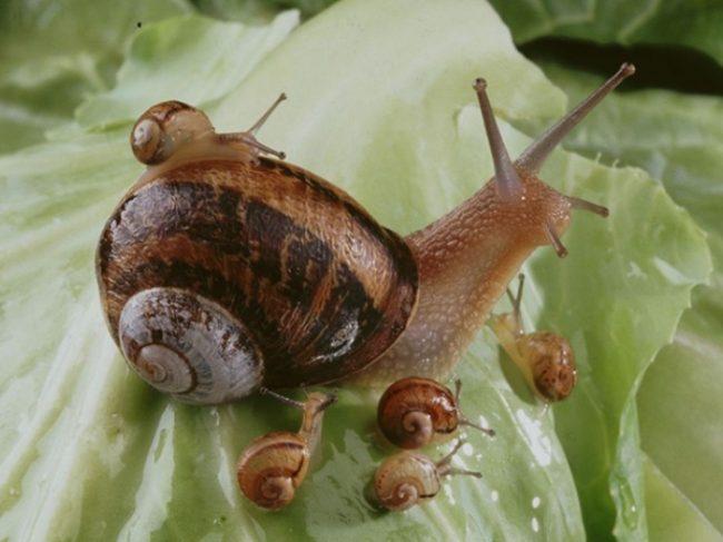 Élevage et vente d'escargots Ferme du Colimaçon